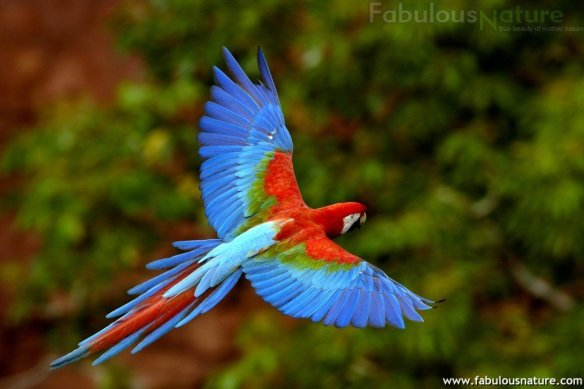Photo courtesy of http://www.fabulousnature.com/img2451.htm